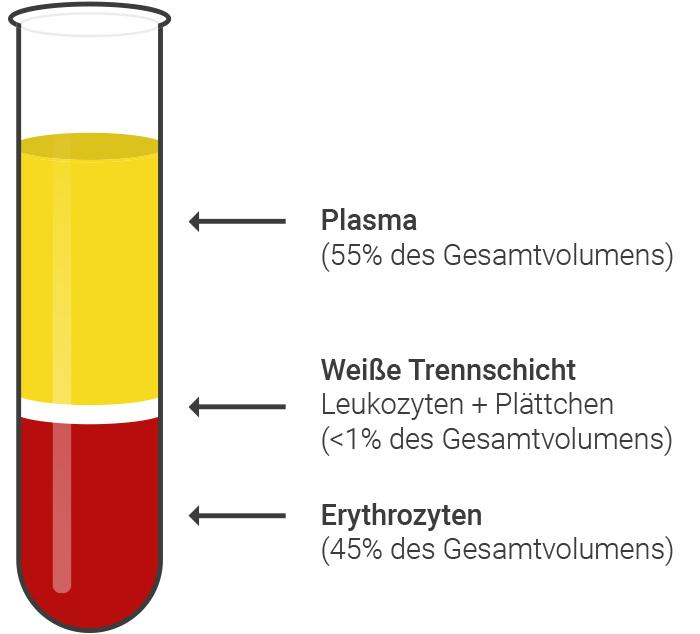 Abbildung 3: Schematische Darstellung des ersten Zentrifugationsschrittes